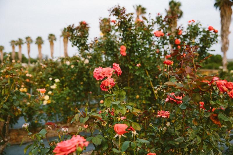 Lize & Jaco | Lad & Lass | Ludwigs Rose Garden_0061.jpg